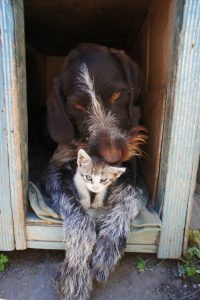 dog-and-cat-211503_1920